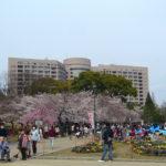 今日の鶴舞公園