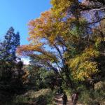 犬山へハイキング