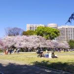 今日の鶴舞公園(2020桜の頃)