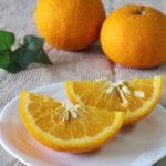 ミカンから甘夏まで〜この半年の柑橘類