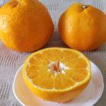 初の「はるみ」(柑橘類)
