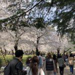 今日の鶴舞公園(2021年桜の頃)