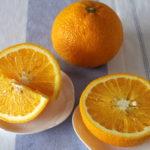 初のスイートスプリング(柑橘類)